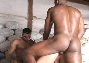Three gay boys do some obese ass plugging in interracial threesome
